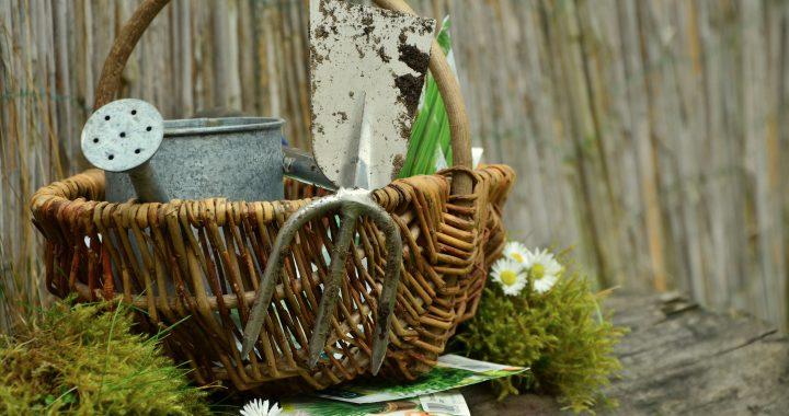 garden-1290908